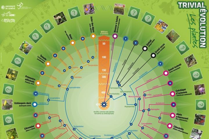 Plateau trivial evol plantes final site